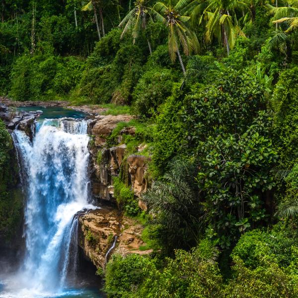 jungle indonesia
